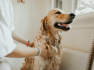 Boutique Dog Grooming Salon for sale in the Sutherland Shire CF
