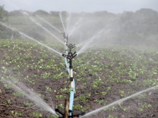 Pump And Irrigation Business For Sale Business Ref# 1819